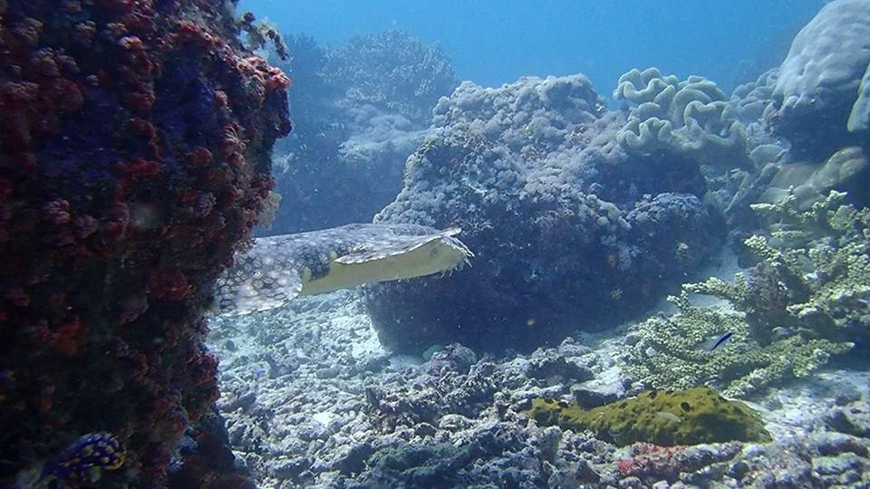 Pourquoi Plongée Amed Bali est L'une des Meilleures Options