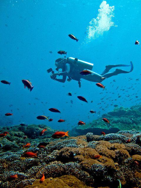 Baptême plongée Bali : à la découverte de nouvelle sensations grâce à un