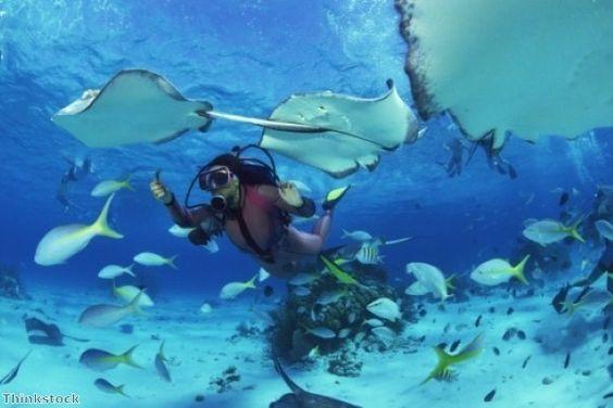 Respecter l'environnement durant un Safari Bali Plongée