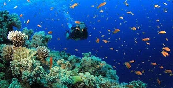 Plongée tulamben