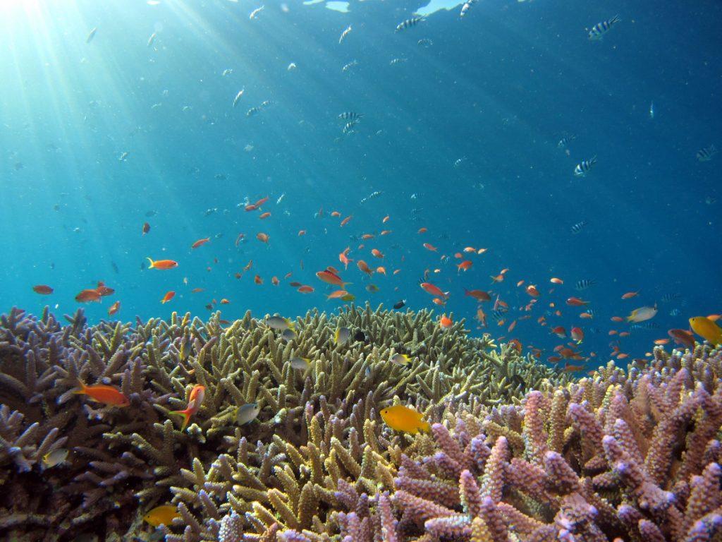 Voyage Plongée Bali