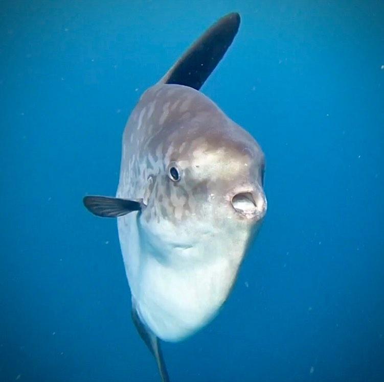 Ce qu'il faut savoir sur la saison du mola mola à Bali